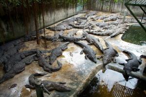 Palawan Crocodile Farm Photograph c/o getfoxy.com