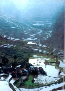 A view of the Rice Terraces