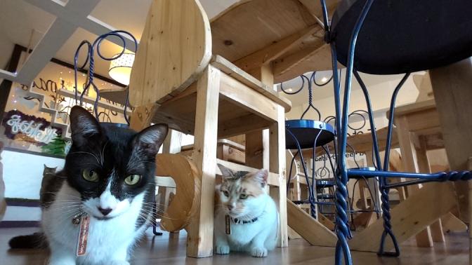 05 2015 12 Uchi no Neko, Cat Cafe