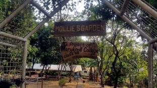 Mollie's Garden, Miriam College