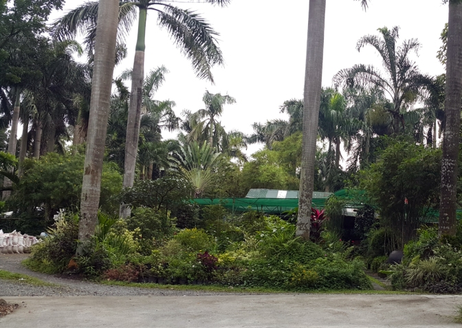 04-landscaping-businesses-at-carlos-p-garcia-avenue