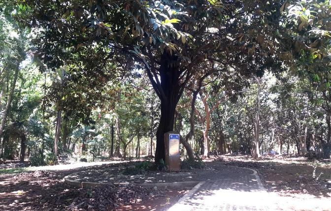 2015 Heritage Tree (planted 1940)