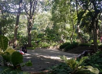 19 2005 La Mesa Ecopark, Orchidarium 1