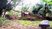 MC Mini-Forest Park, Crucifix Prayer Grove