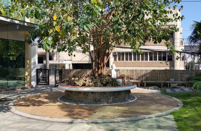 04 2011 Bodhi Tree