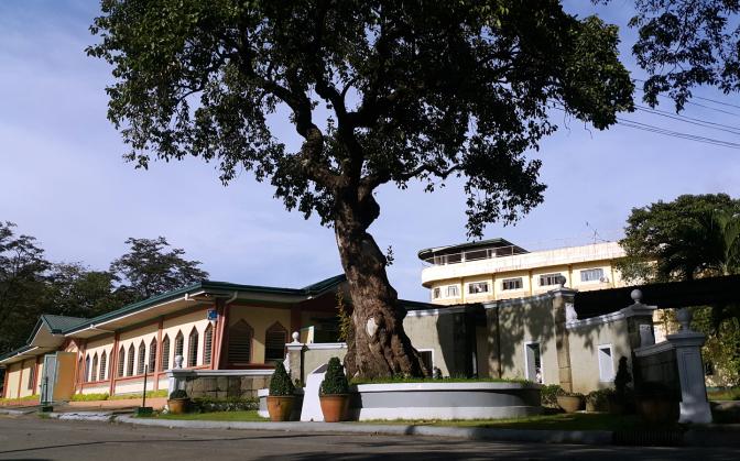 16 1864 Katipunan Tree, Metro Manila College, Jordan Plains Subdivision, Barangay Santa Monica